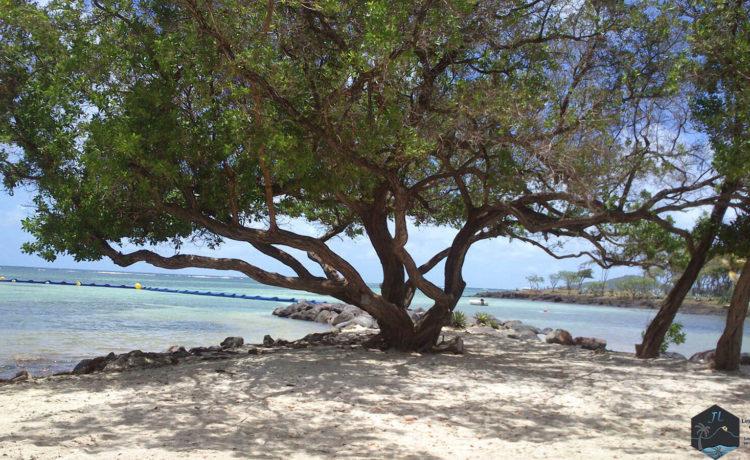 Découvrez l'ile de la Martinique - Arbre-plage