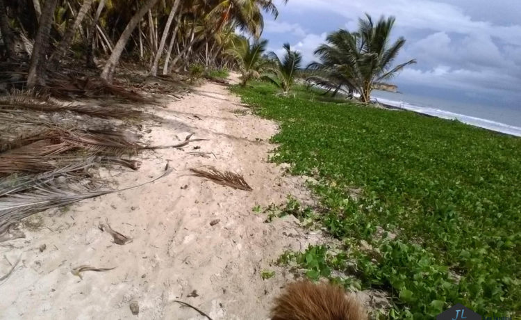Découvrez l'ile de la Martinique - Balade à cheval-Plage de Macabou