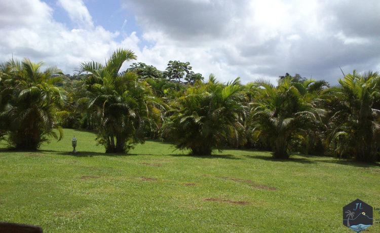 Découvrez l'ile de la Martinique - Clément-Près des Jardins de Laclos