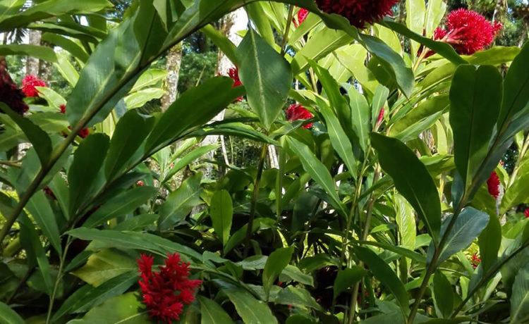 Découvrez l'ile de la Martinique - Jardin de Balata