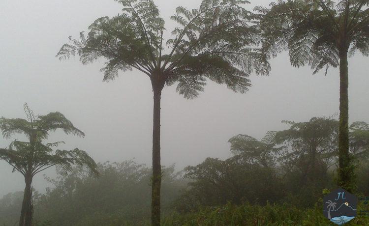 Découvrez l'ile de la Martinique Montagne Pelée - Martinique