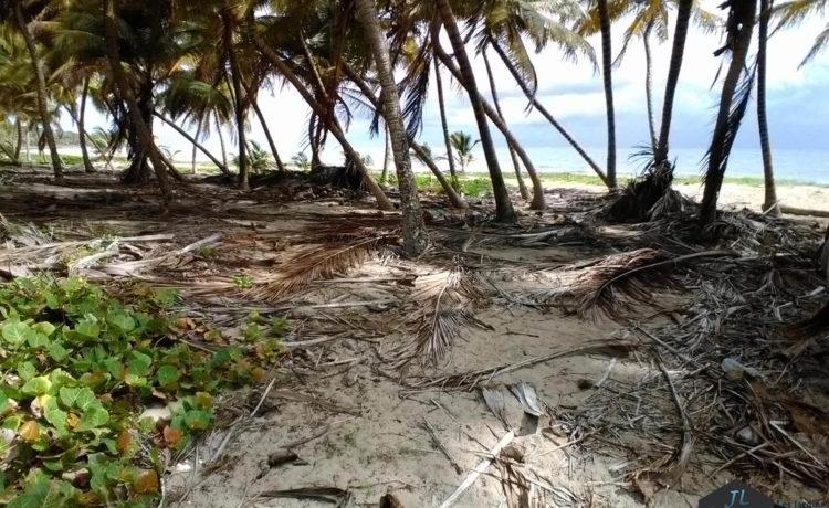 Découvrez l'ile de la Martinique - Plage Macabou