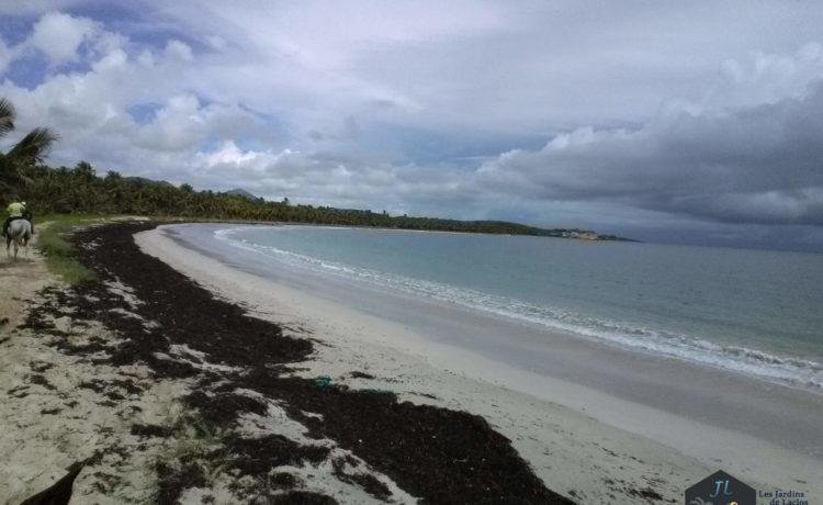 Découvrez l'ile de la Martinique Plage Macabou