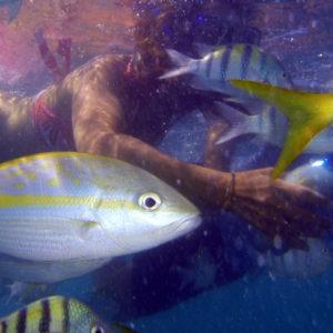 Découvrez l'ile de la Martinique - Plongée-sous-marine