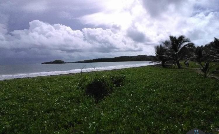Découvrez l'ile de la Martinique - Promenade à cheval