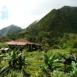 Découvrez l'ile de la Martinique - Randonnées