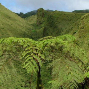Découvrez l'ile de la Martinique - Montagne Pelée